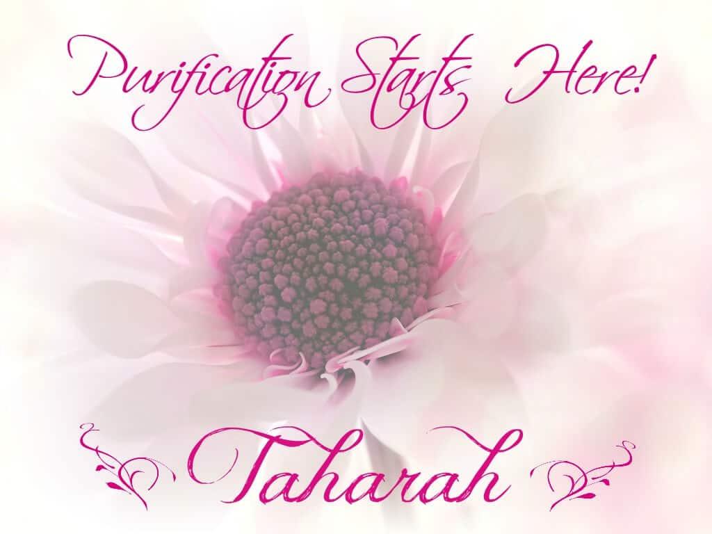 tahara,purification